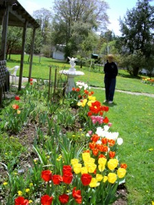 Louise Redden shows off the fabulous spring garden at her home on Lower Main Street