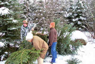 Mary, Troy and Sharon Tucker picking up the tree Troy just cut down