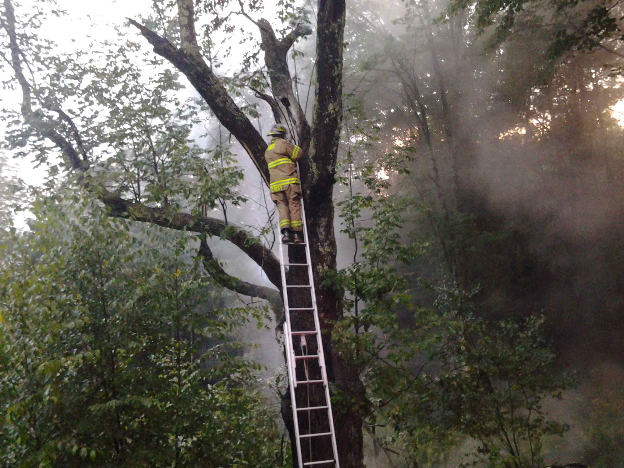 FIRE DEPARTMENT'S HANDLING OF TREE FIRE GARNERS THANKS — October 2013