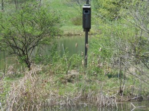 Wood Duck House - note canada goose