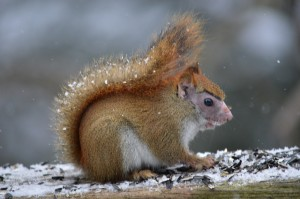 Photo Squirrel  by Rose Wadsworth (1)