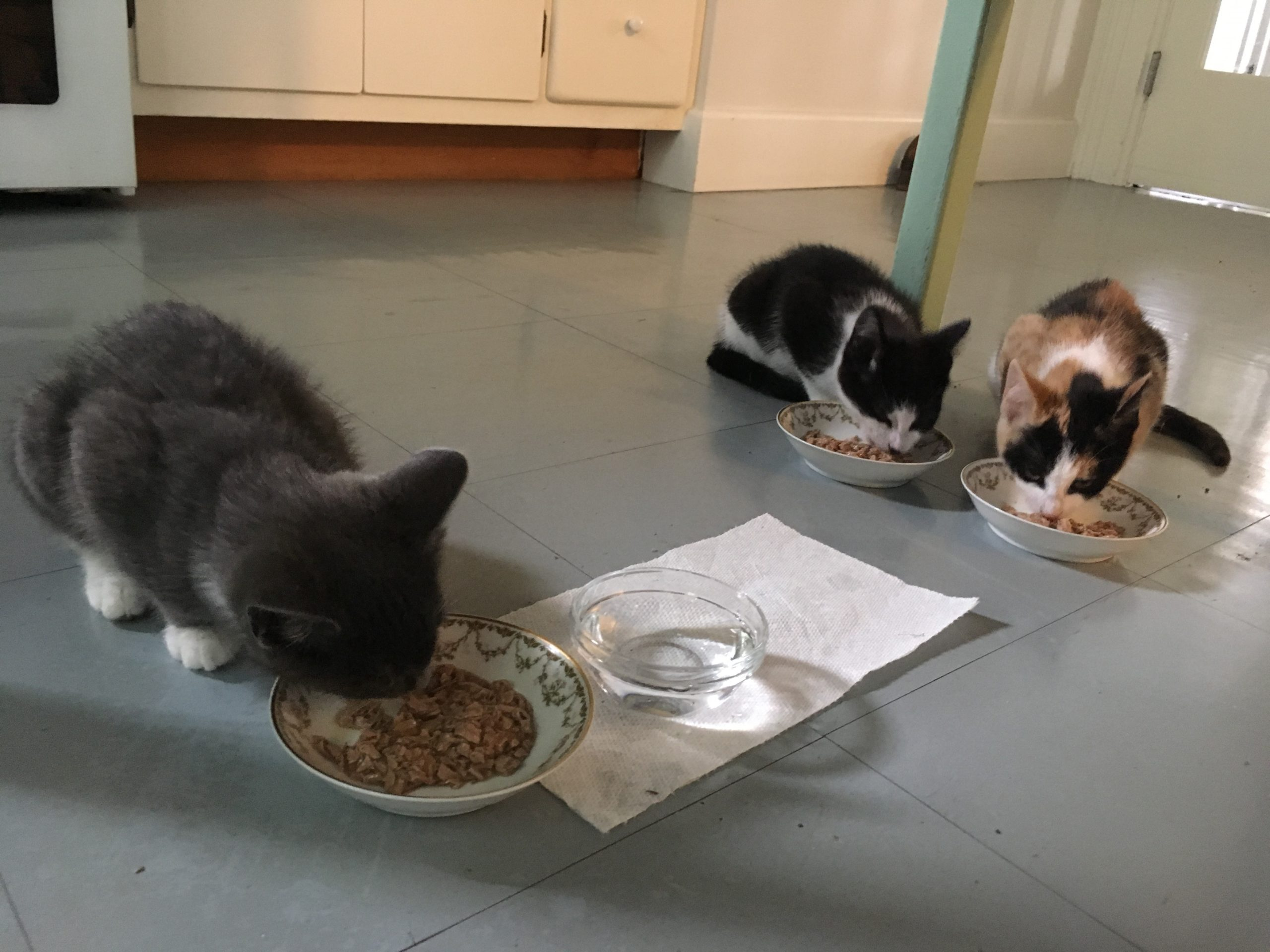 SUMMER OF WILDINGS PART TWO: TAMING FERAL KITTENS — November 2019